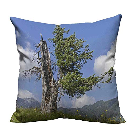 YouXianHome Decorative Throw Pillow Case Spruce Tree Coming Back to Life from Death in Summer Meadow Country Image Ideal Decoration(Double-Sided Printing) 21.5x21.5 -