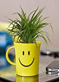 Rolling Nature Air Purifying Spider Plant in Smiley Cup