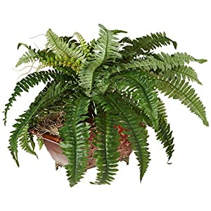 Nearly Natural 6933 Boston Fern in Metallic Planter 32