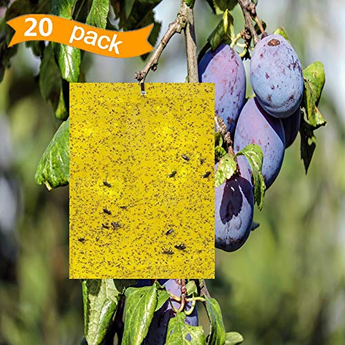 Metrmiss Dual-Sided Yellow Sticky Traps for Flying Plant 6x8 Inches with Twist Ties Pack of 20