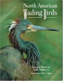 North American Wading Birds (Wildlife)