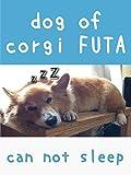dog of corgi FUTA - can not sleep