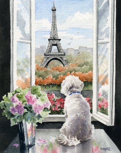 Bichon Frise In Paris Art Print by Watercolor Artist DJ Rogers