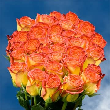 Amazon Globalrose 75 Yellow Roses With Red Yellow Tips Long
