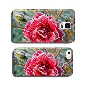 Beautiful red rose in the frosty morning in the garden cell phone cover case iPhone6