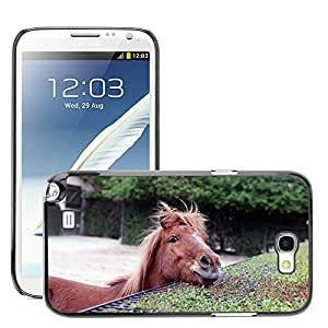 Hot Style Cell Phone PC Hard Case Cover // M00129784 Animal Horse Young Animal Horse Head // Samsung Galaxy Note 2 II N7100