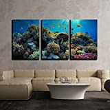 wall26-3 Piece Canvas Wall Art - Beautiful View of Sea Life - Modern Home Decor Stretched and Framed Ready to Hang - 24''x36''x3 Panels