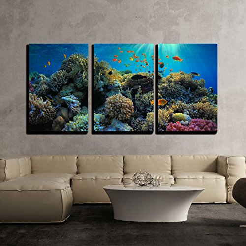Beautiful View of Sea Life x3 Panels