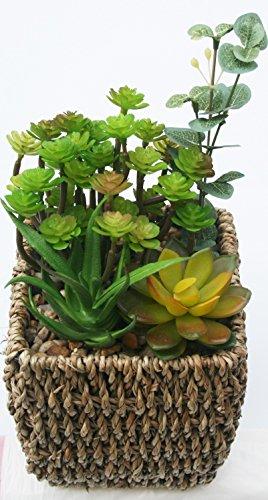 Mini Echeveria Succulent Mix Artificial Potted Plant Braided Hemp