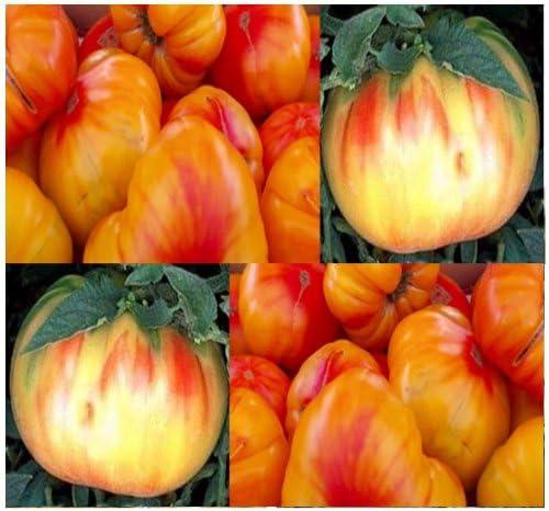 Amazon Com Old German Tomato Seeds Heirloom Tomato Orange