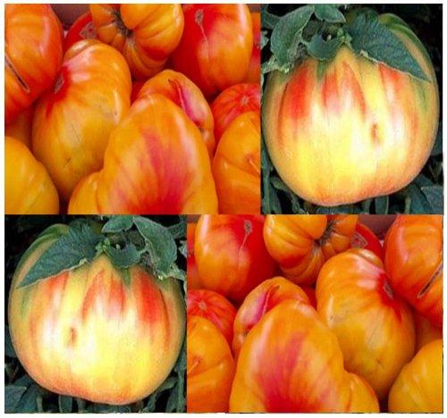 20 OLD GERMAN HEIRLOOM Tomato Seeds ~ ORANGE CENTER YELLOW HUGE 16 oz FRUITS ~ ()