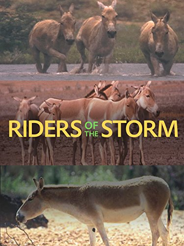 Desert Island Winds - Riders of the Storm