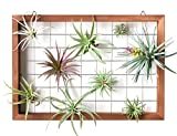 Mkono Air Plant Frame Hanging Airplant Holder