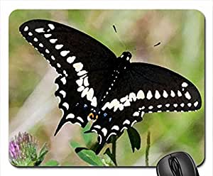 Black beauty Mouse Pad, Mousepad (Butterflies Mouse Pad, 10.2 x 8.3 x 0.12 inches)