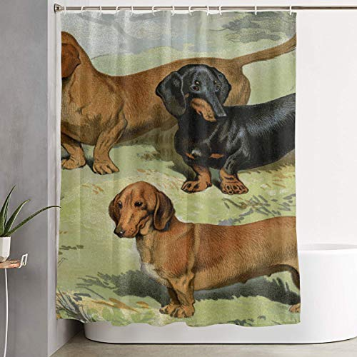 Techdecorhomee Shower Curtains Set with Hooks Art Dachshund Dog Soap Mildew Resistant Waterproof Antibacterial Polyester Decor Bathroom Curtain 6071inch/150180cm