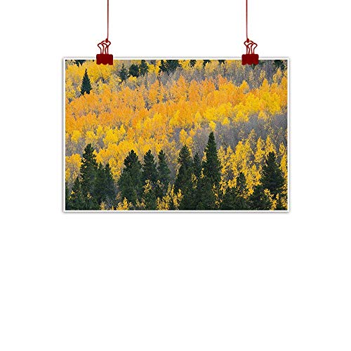 Sunset glow Decorative Music Urban Graffiti Art Print Fall,Colorful Aspen Forest in Colorado Rocky Mountains Western Wilderness USA Theme, Green Yellow Grey 32