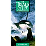 Trials of Life: Hunting & Escaping