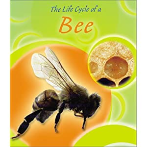 The Life Cycle of a Bee (Life Cycles (Peeble Books/Capstone)) Lisa Trumbauer
