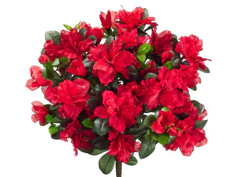 14-Water-Resistant-Azalea-Bush-x13-RED-Pack-of-12