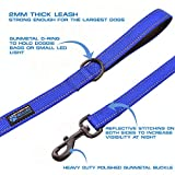 Max and Neo Double Handle Traffic Dog Leash