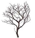 """Natural Red Manzanita Branches, 18"""" Tall for Wedding Centerpieces"""