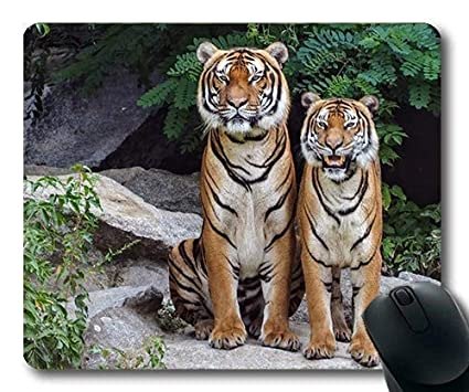 6d1067ed59246 Amazon.com : Funny Animal Mouse Pads, Animal Park Animal Photography ...