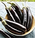 buy David's Garden Seeds Eggplant Little Finger TC3021 (Purple) 50 Non-GMO, Organic Seeds now, new 2020-2019 bestseller, review and Photo, best price $7.95