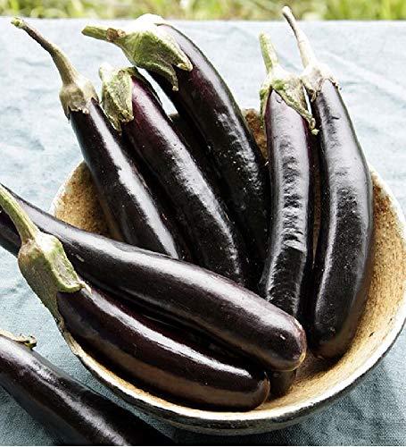 David's Garden Seeds Eggplant Little Finger SL3021 (Purple) 50 Non-GMO, Heirloom Seeds