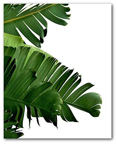Banana Leaf Print, Tropical Palm Leaf, 8 x 10 Inches, Unframed