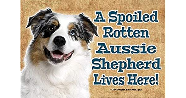 Amazon.com: Australian Shepherd Aussie Shepherd - A Spoiled ...