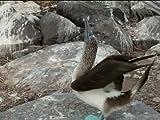 Galapagos-Nature's Playground