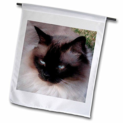 (3dRose fl_1220_1 Siamese Cat, Garden Flag, 12 by 18-Inch)