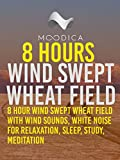 8 Hours: Wind Swept Wheat Field: 8 Hour Wind Swept Wheat Field with Wind Sounds, White Noise for Relaxation, Sleep, Study, Meditation