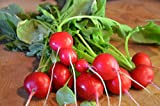 Radish Seeds, Cherry Belle Radish-1000 Seeds , Organic, Harvest in 22...