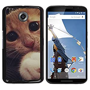 Qstar Arte & diseño plástico duro Fundas Cover Cubre Hard Case Cover para Motorola NEXUS 6 / X / Moto X Pro ( Cute Sad Frightened Kitten Cat Paw Eyes)
