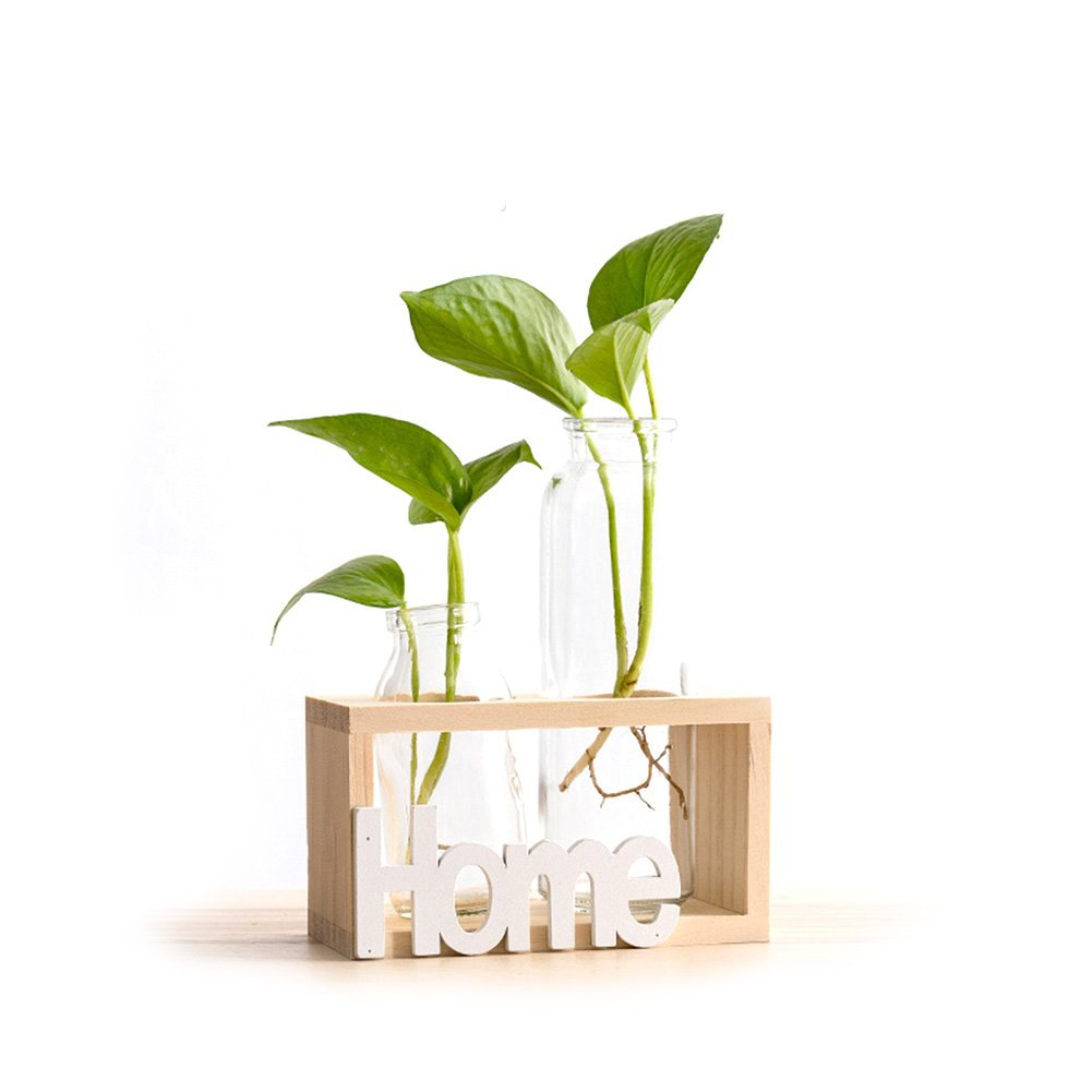 HaloVa Terrarium, Creative Fashion Plant Terrarium, Modern Decorative Clear Glass Planter Hydroponics Terrarium with Wooden Stand for Home Office and Centerpieces Decor, Raw Wood, 2 Terrarium by HaloVa (Image #1)