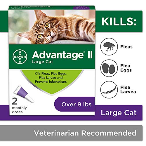 Flea Prevention Cats, over 9 lbs,  2 doses, Advantage II (Best Shampoo To Get Rid Of Fleas On Dogs)