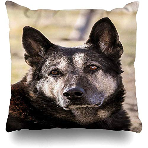 (Throw Pillow Cover Square Cases 18x18 Brown Black Dog 700D Nature Solitaire Close Detail Expression Lens Zippered Cushion Case Home Decor)
