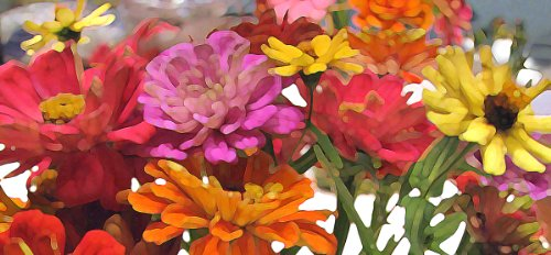 We Are SO Happy!, Canvas Art Picture of Colorful Zinnia Flowers, Giclée Print 14 X 30 Inches