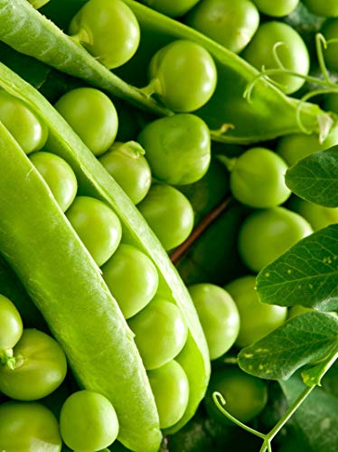 English Pea - Seeds Pea Miracle Giant Green Garden Organic Vegetable Heirloom Russian Ukraine