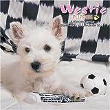 Westie Puppies 2009 Wall Calendar
