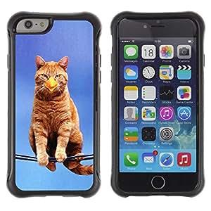 Suave TPU GEL Carcasa Funda Silicona Blando Estuche Caso de protección (para) Apple Iphone 6 / CECELL Phone case / / Cat Bird Sitting Branch Yellow Ginge Beak /