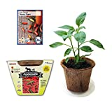 Easy To Grow Peppers, All In One Seed Starter Kit - Includes Pepper Seeds, Coconut Fiber Pot and Coconut Fiber Soil Disc (Tabasco)