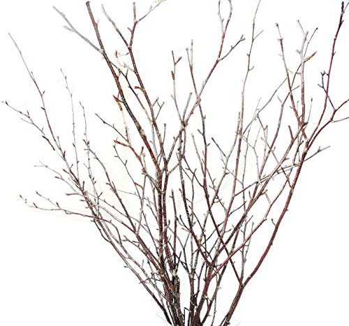 Tree Branches Amazon Com