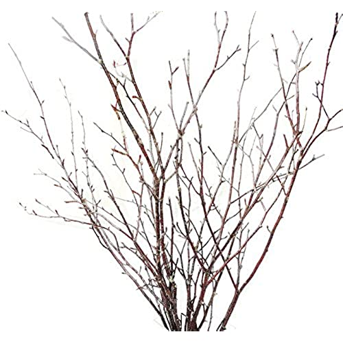 ft small pack roof treasure amazon birch natural decorative of decor branches tin com slp