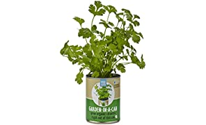 Back to the Roots Garden-in-a-Can: grow organic cilantro
