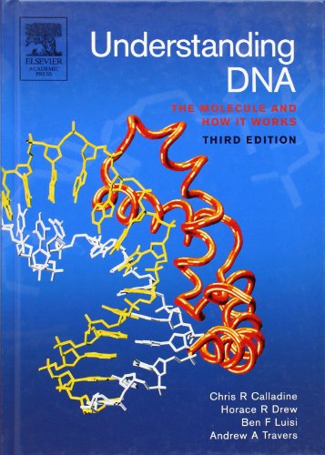 Understanding DNA: The Molecule and How it Works