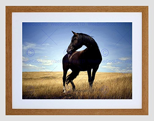 Black Horse Stallion Field Black Frame Framed Art Print Picture Mount B12x8291