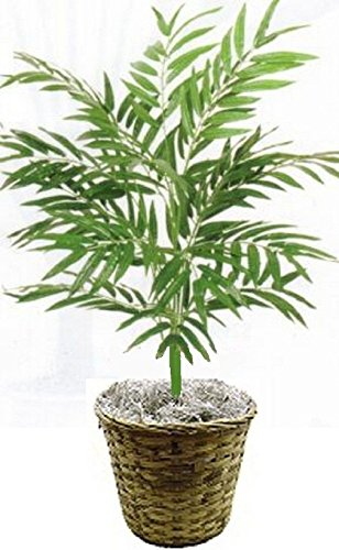 3' Phoenix Palm Plant Artificial Silk Tree Bush In Basket Pot Areca Date Bamboo by Black Decor Home