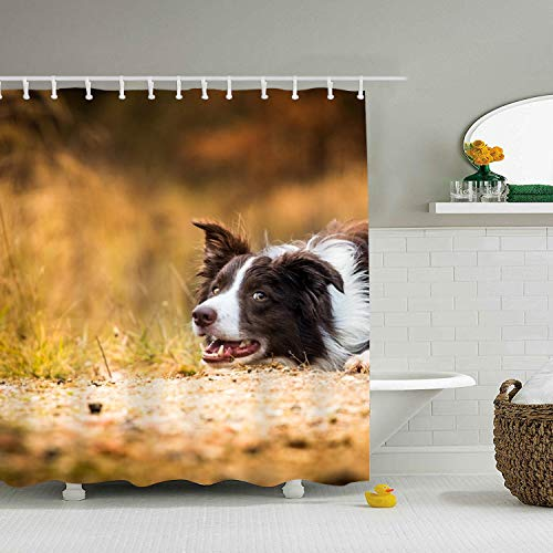 Mweet Border Collie Dogs Decor Shower Curtain, Bathroom Accessories 65 × 71 inch ()